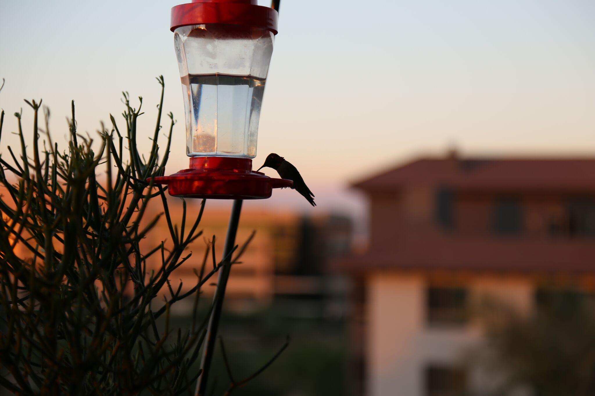 Luxury Scottsdale Condo Bird Feeder